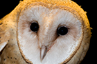 Owl Sponsorship