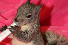 Squirrel Sponsorship