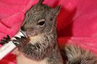 Squirrel Sponsorship